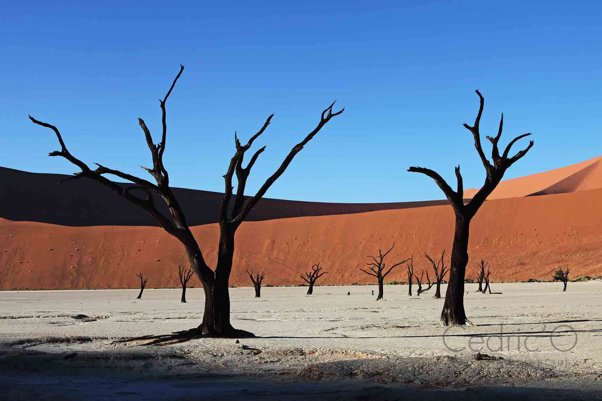 Skeleton Trees of Deadvlei