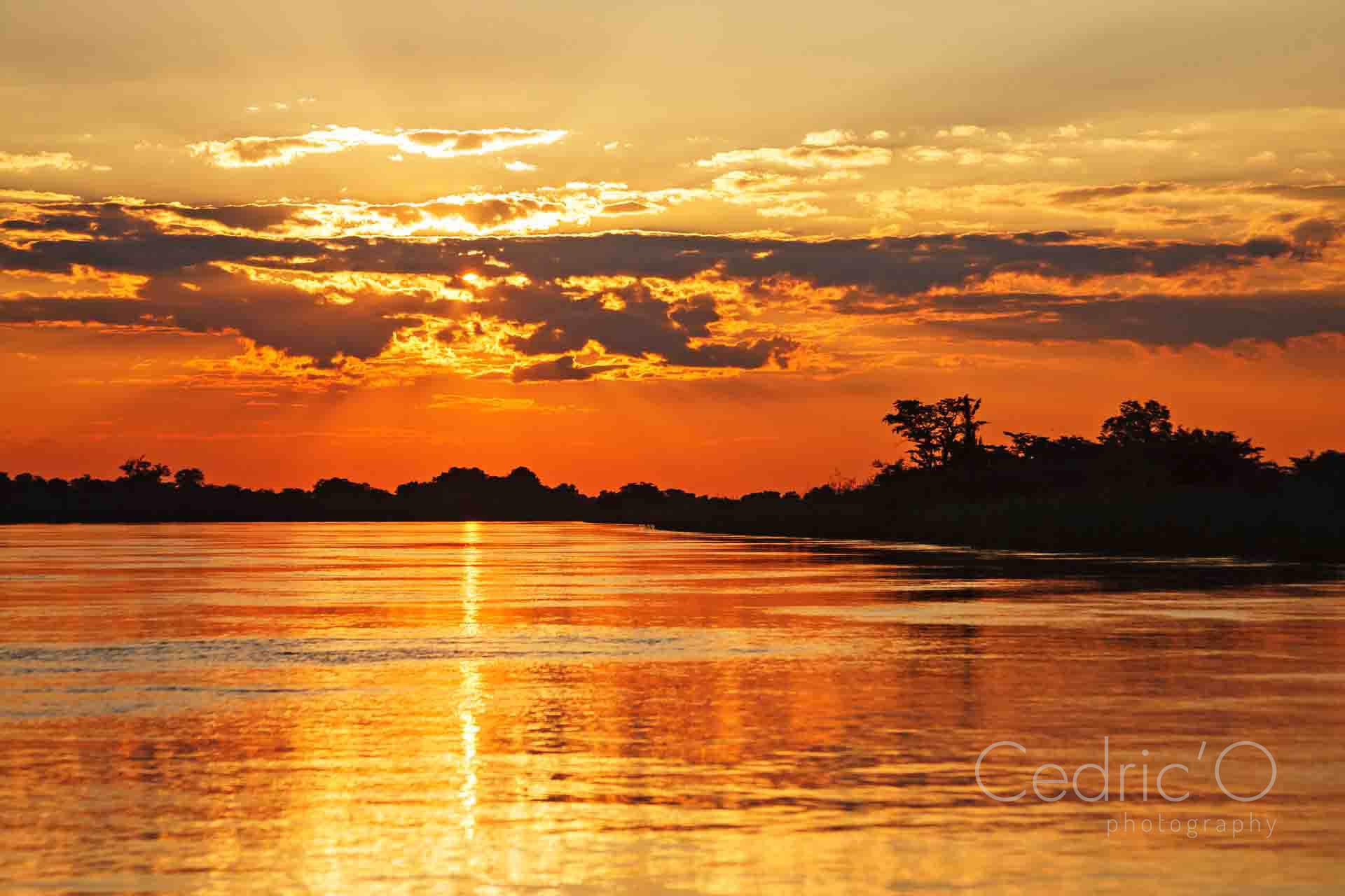 Chobe Gold