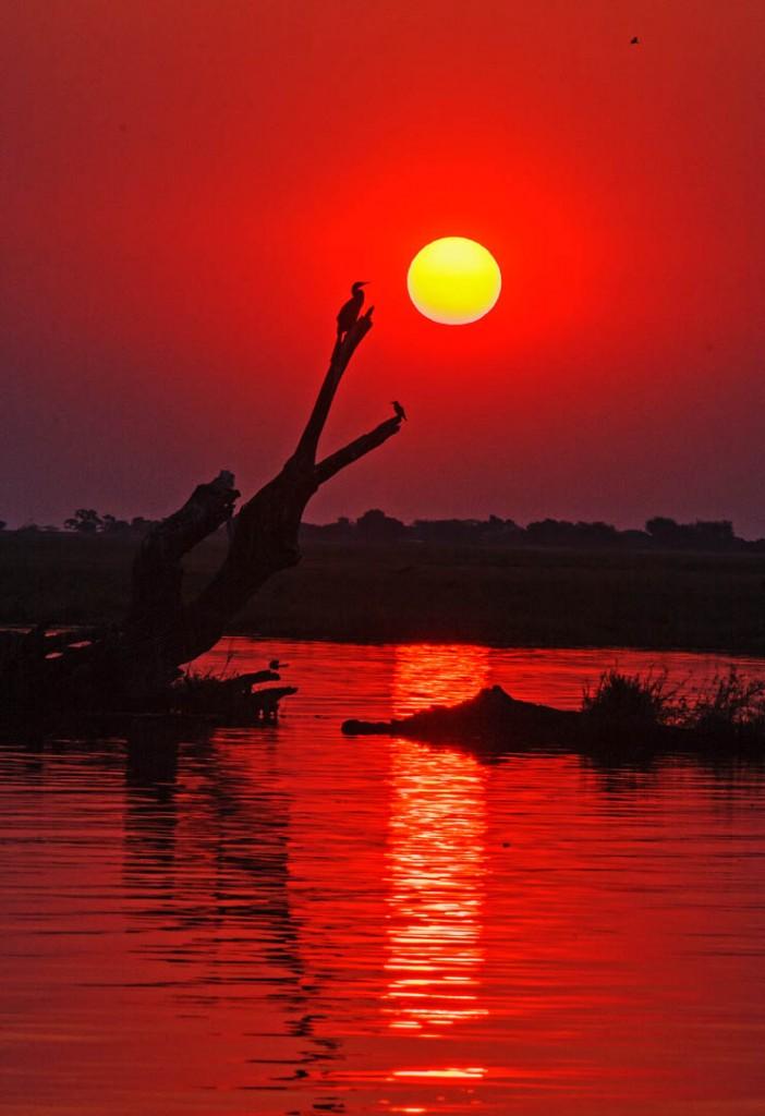 Chobe Red