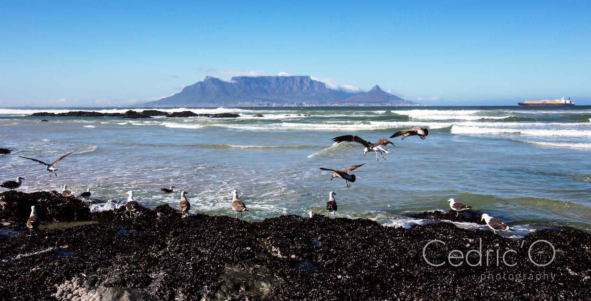 Table-bay with Table-Mountain