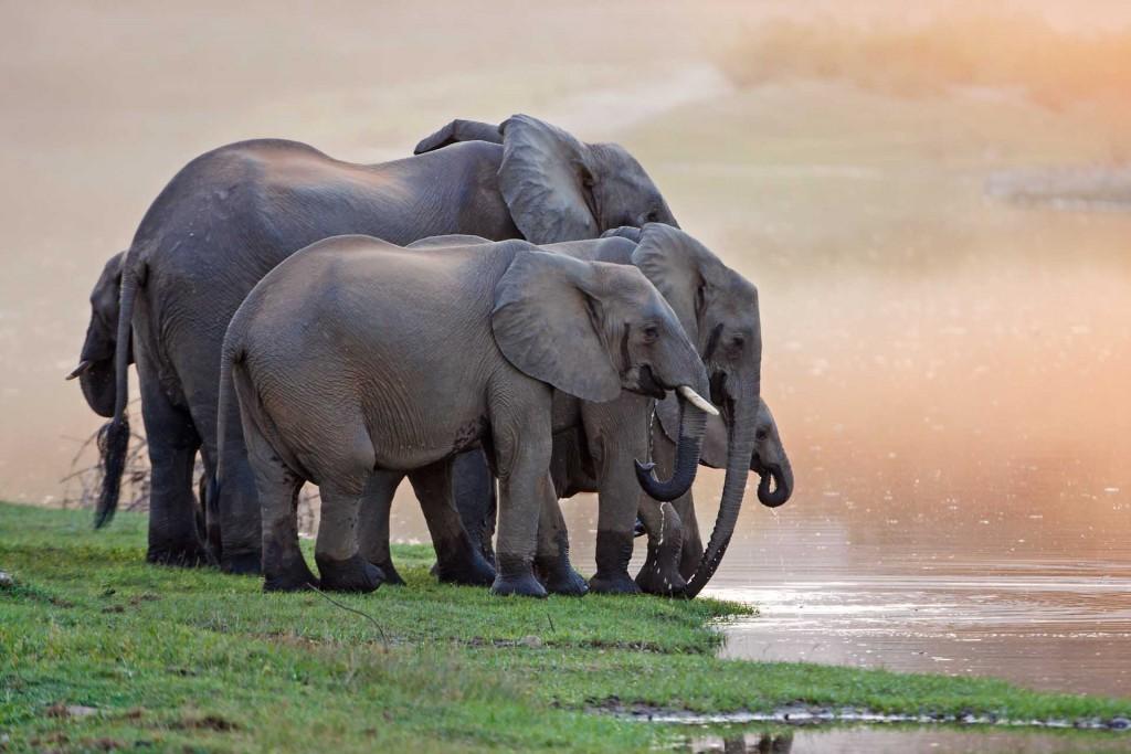 Elephant Sun-downers