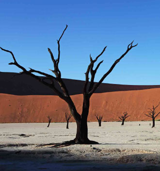 Skeleton Trees of Deadvlei